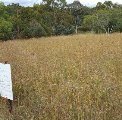 Restoring Grasslands