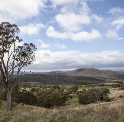 Restoring Woodland