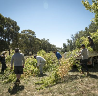 Landcare and ParkCare