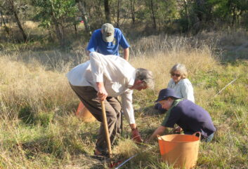 Out to pasture: Trees are important, but grasslands are vital too